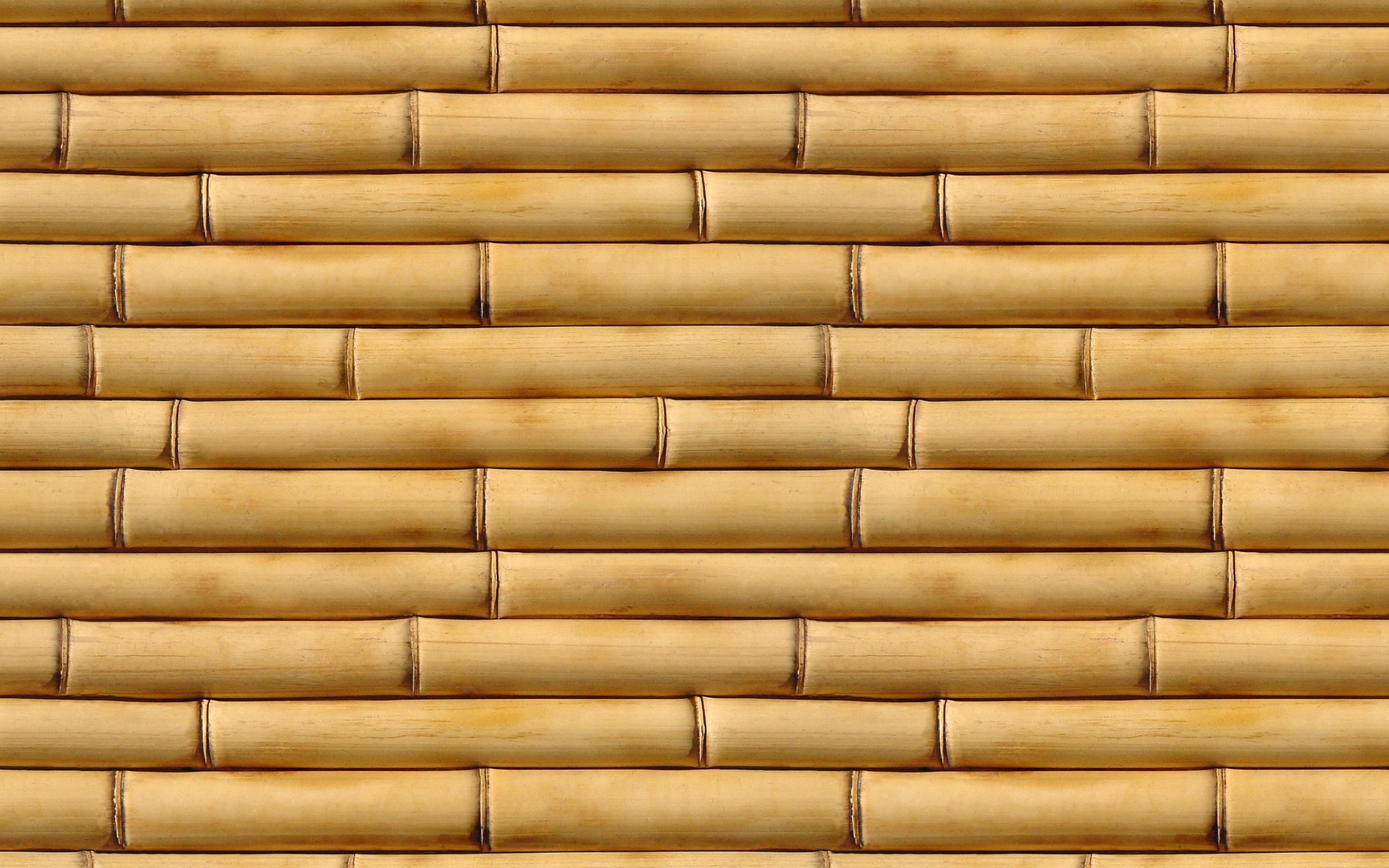 Fall Ceiling Wallpaper Hd Hd Bamboo Backgrounds Download Pixelstalk Net