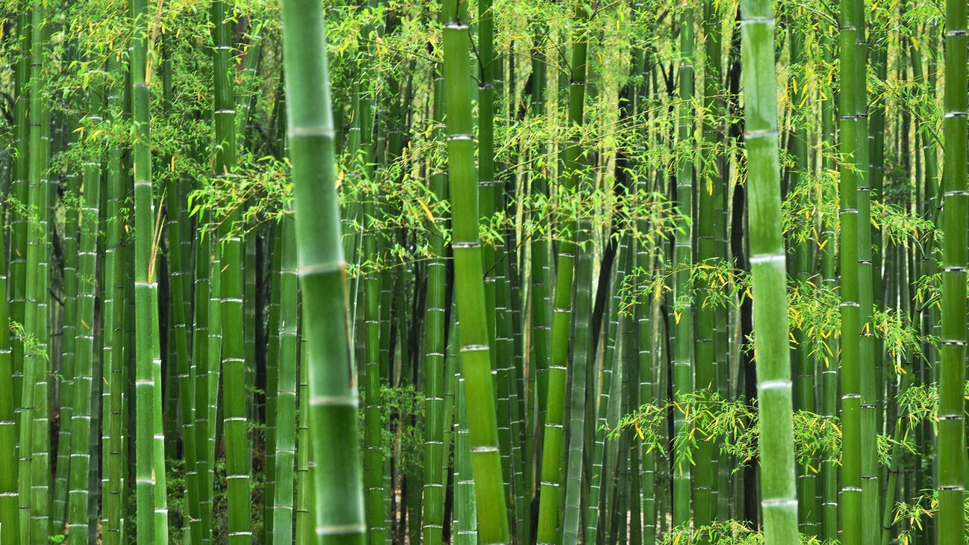 Free HD Bamboo Wallpapers  PixelsTalkNet