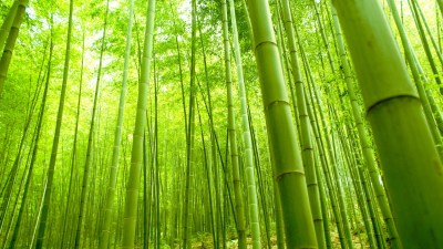 Desktop Bamboo HD Wallpapers | PixelsTalk.Net