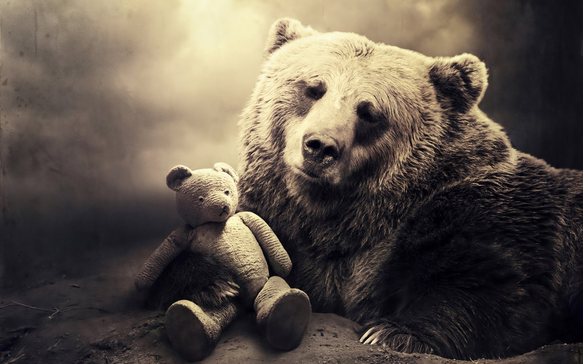 Cute Baby Polar Bear Wallpaper Free Desktop Bear Wallpapers Pixelstalk Net