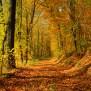 Fall Scenery Wallpapers Free Download Pixelstalk Net