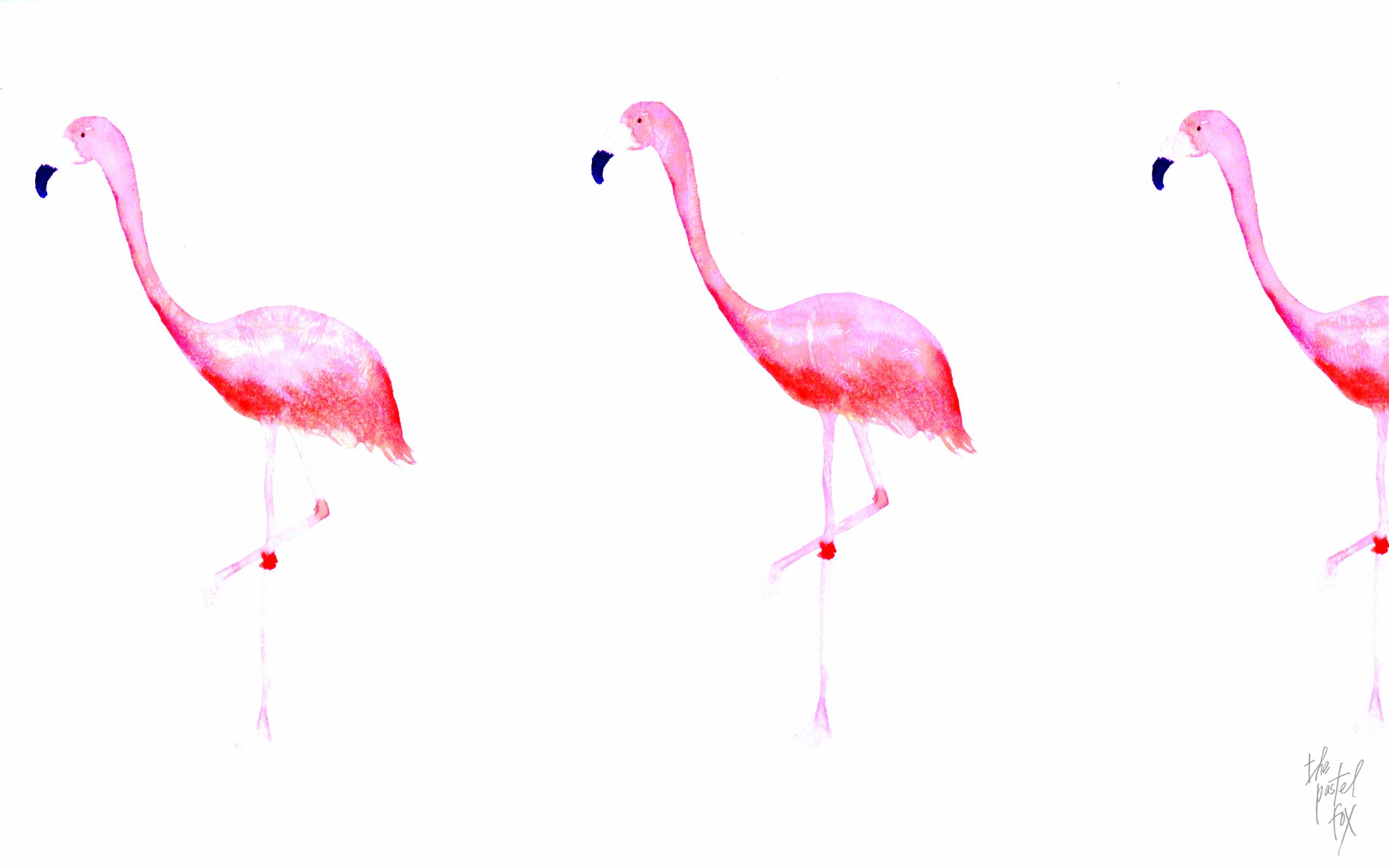 Cute Flamingo Wallpapers Flamingo Wallpapers Hd Pixelstalk Net