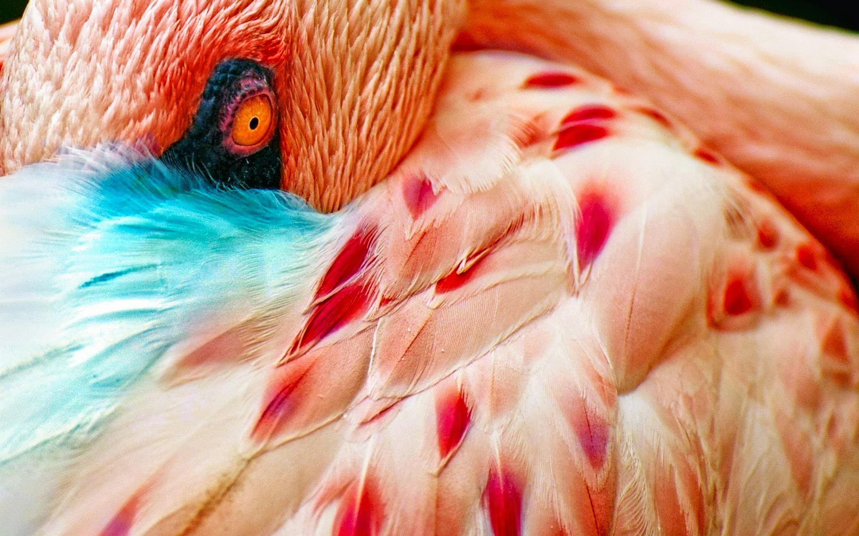 Fall Computer Screen Wallpaper Flamingo Wallpapers Hd Pixelstalk Net