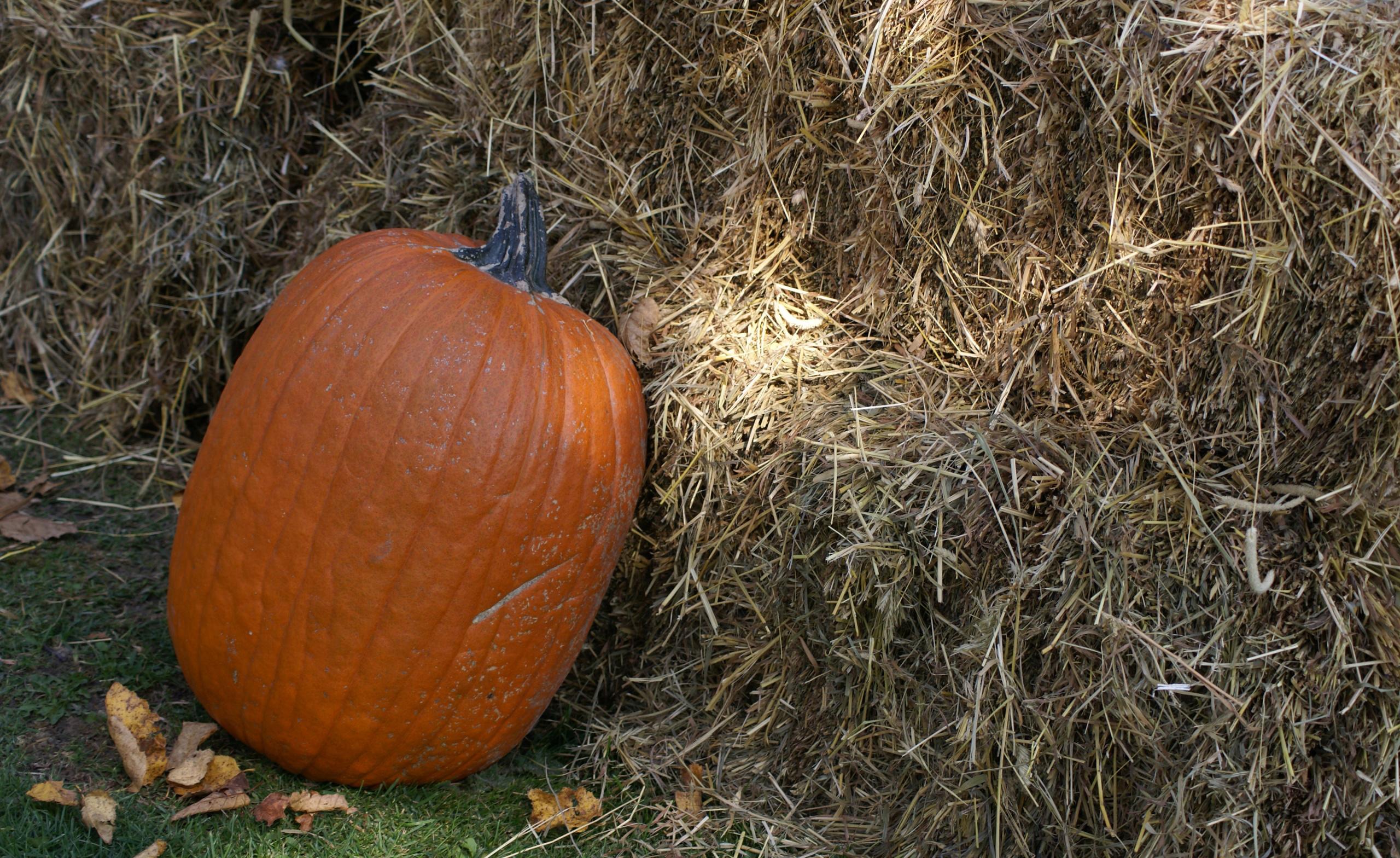 Fall Pumpkin Background Wallpaper Pumpkin Wallpapers Hd Pixelstalk Net