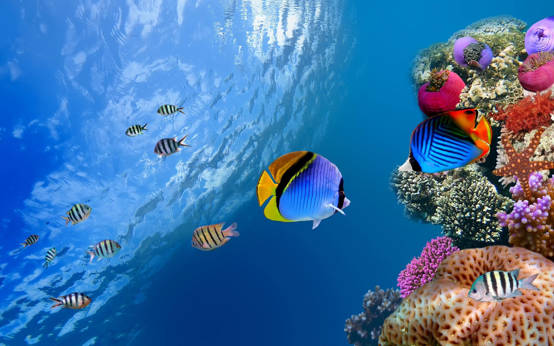 Amazing 3d Wallpapers Download Ocean Underwater Wallpaper Hd Pixelstalk Net