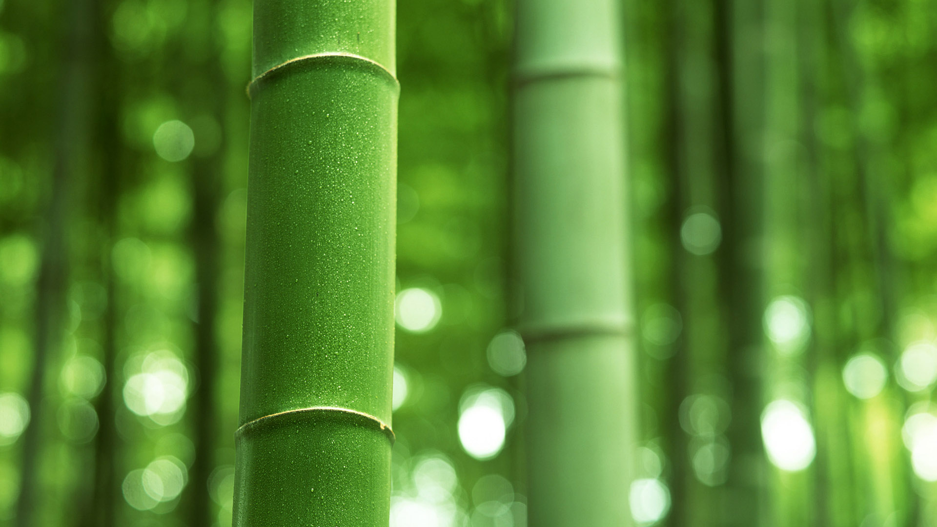 Best Wallpapers 3d Free Download Bamboo Backgrounds Free Download Pixelstalk Net