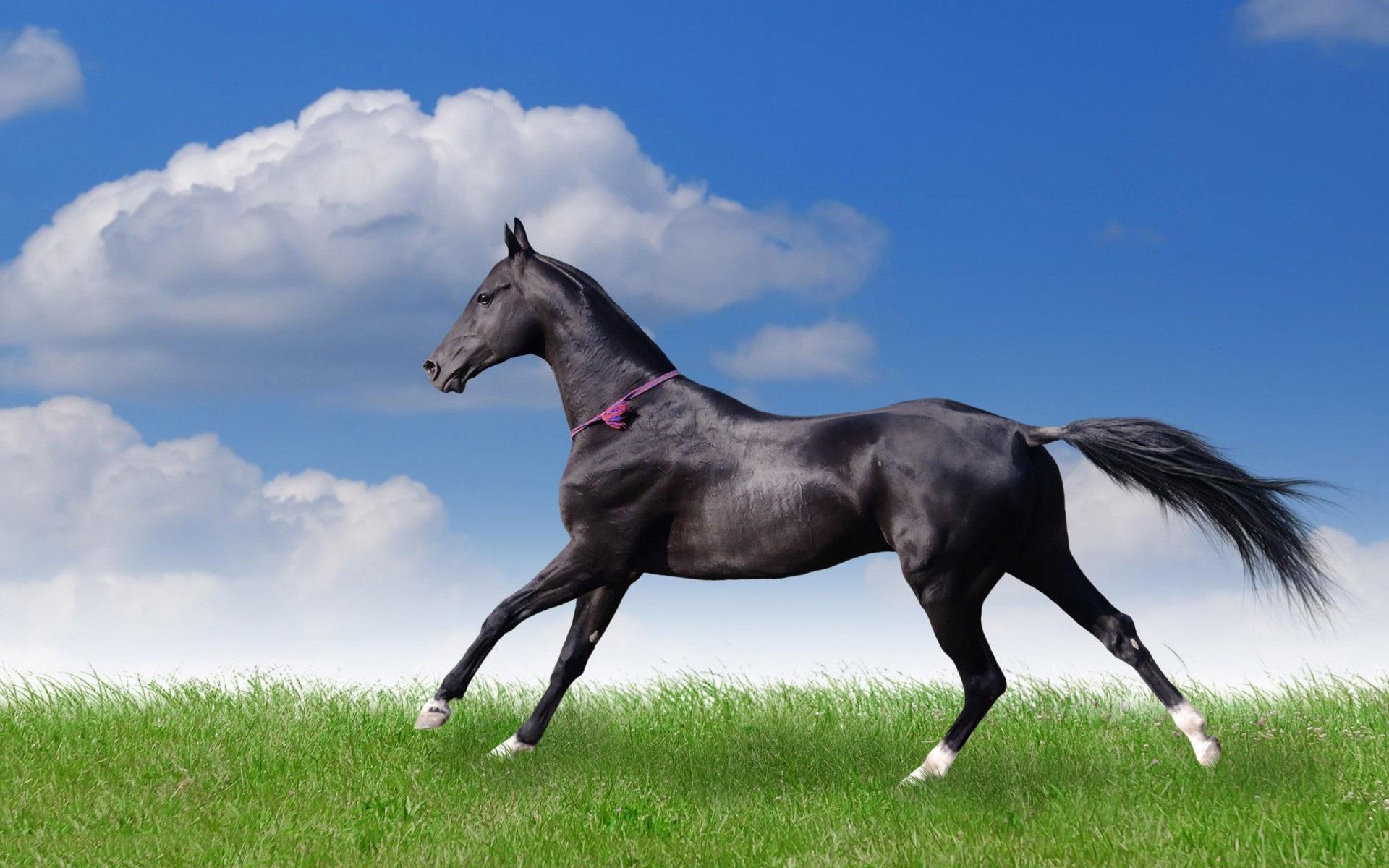 Fall Desktop Wallpaper Full Screen Download Free Black Horse Backgrounds Pixelstalk Net