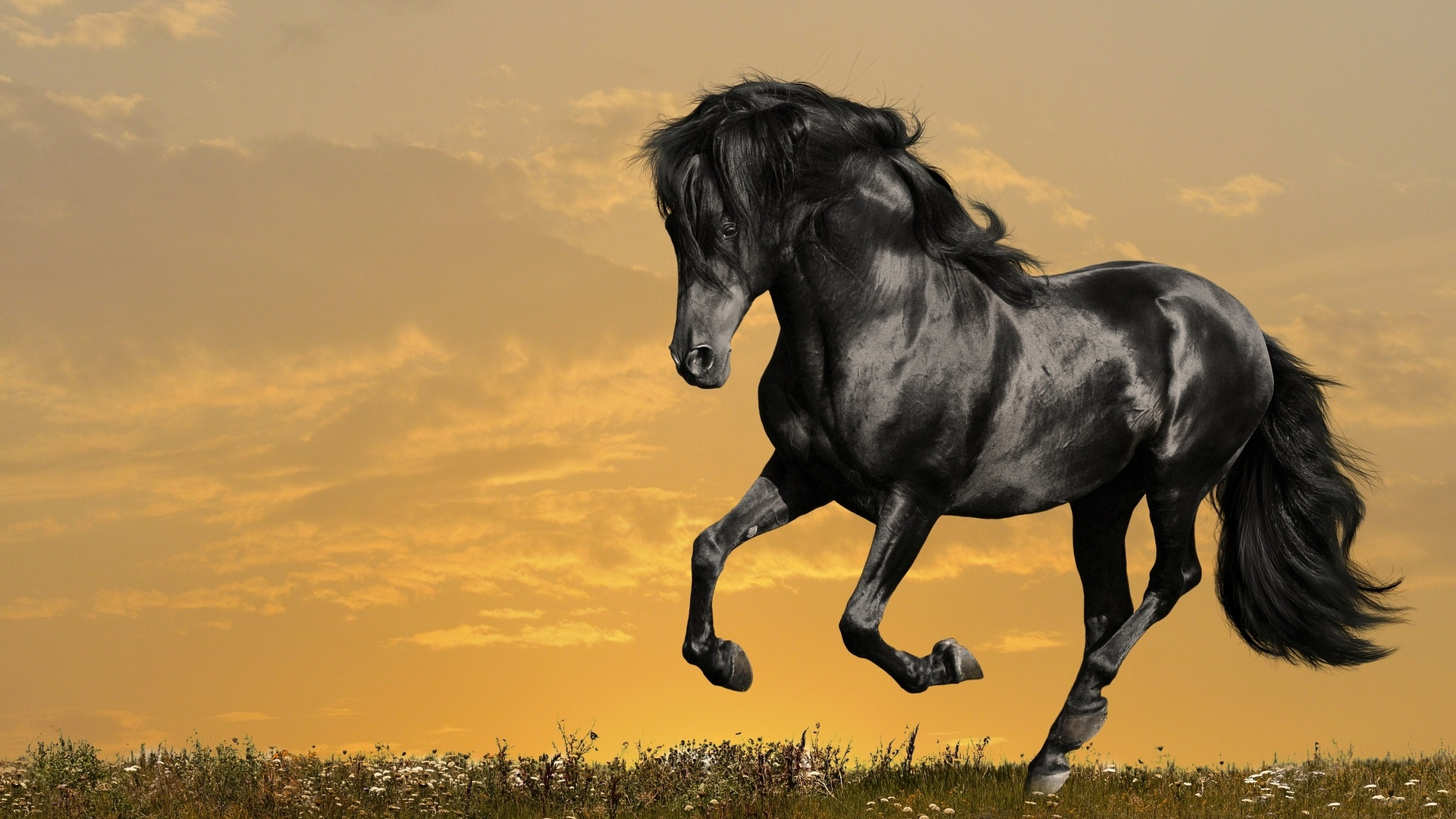 Thanksgiving Fall Wallpaper Download Free Black Horse Backgrounds Pixelstalk Net