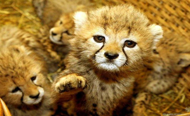 Cute Baby Animal Wallpapers Download Free Pixelstalk Net