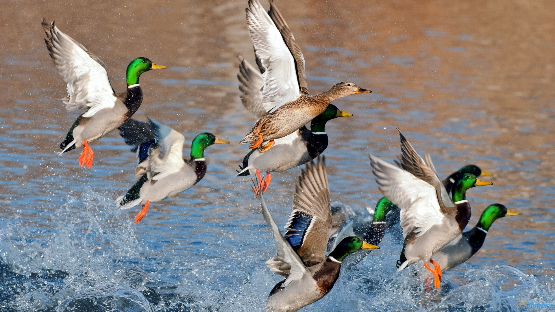 Image result for duck hunting wallpaper