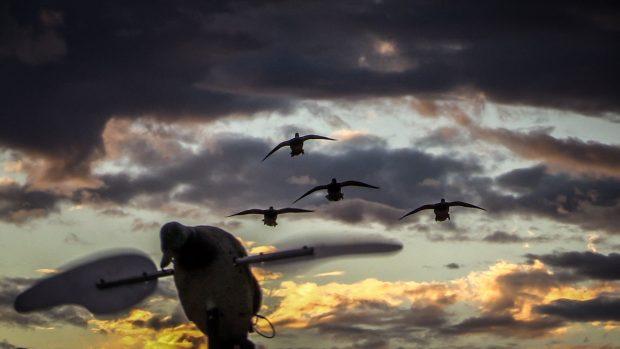 Fall Season Wallpaper Free Duck Hunting Hd Wallpapers Pixelstalk Net