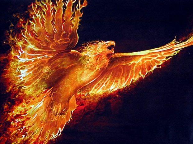 Thanksgiving Fall Wallpaper Phoenix Bird Wallpapers Free Download Pixelstalk Net