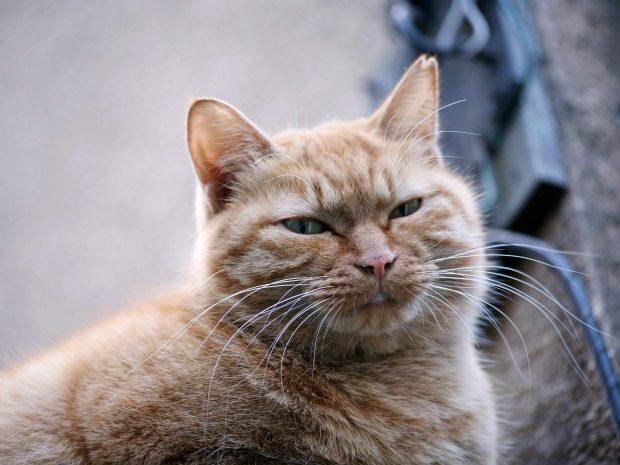 Cool Fall Wallpaper Download Free Warrior Cats Backgrounds Pixelstalk Net