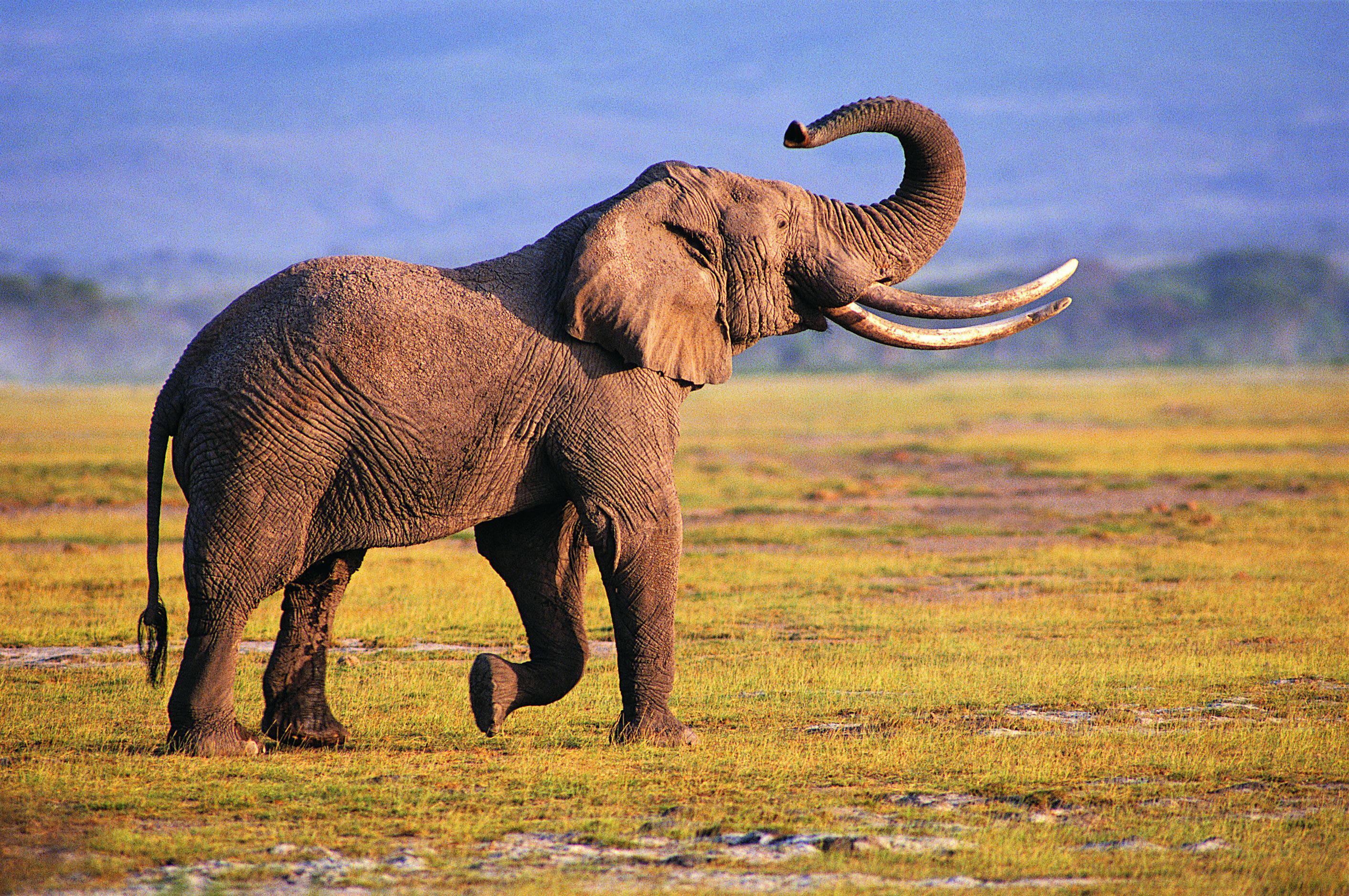 Animal Wallpaper Hd For Mobile Free Download Elephant Wallpapers Hd Pixelstalk Net