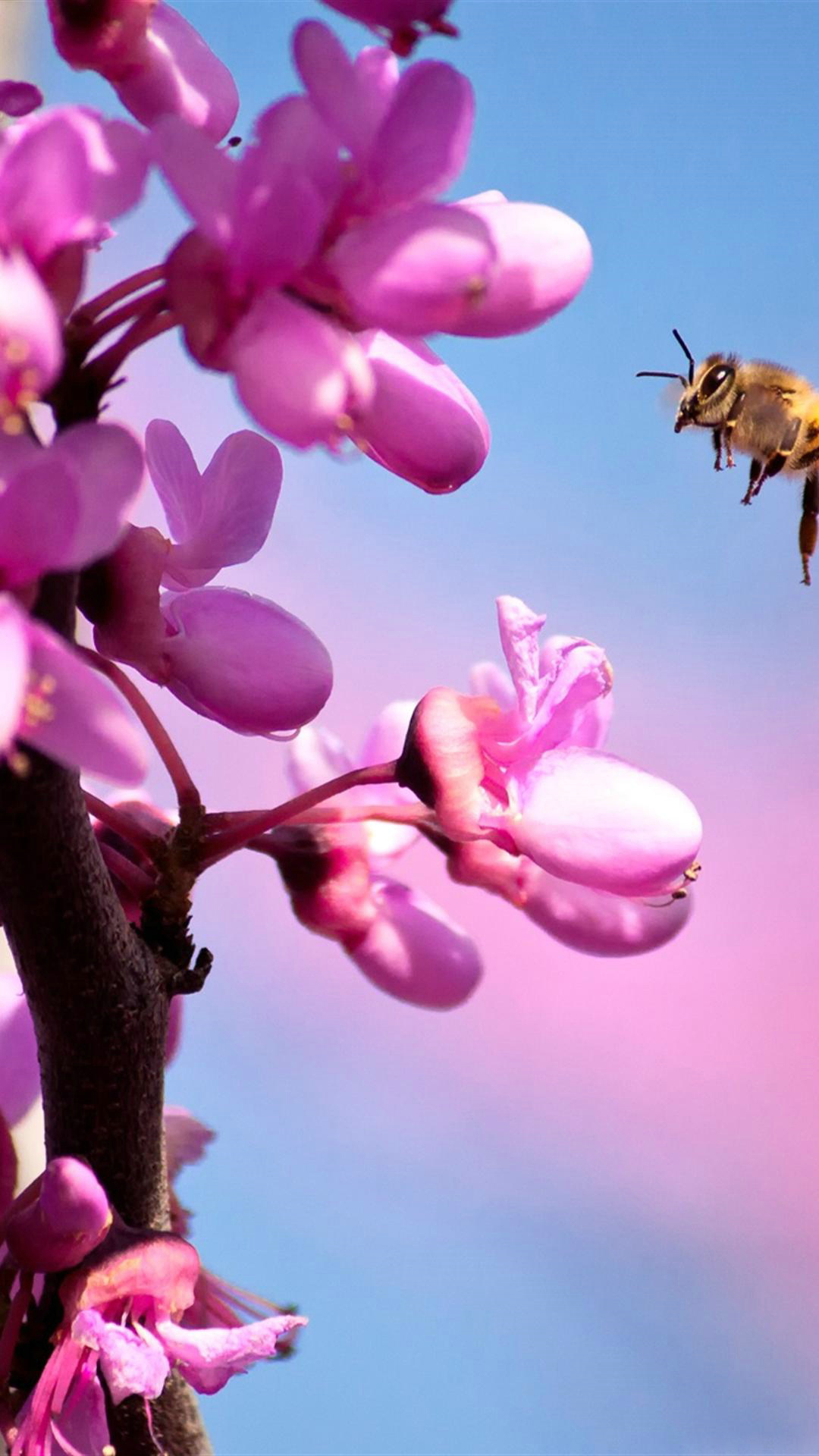 Free Fall Season Wallpaper Flower Iphone Images Free Download Pixelstalk Net
