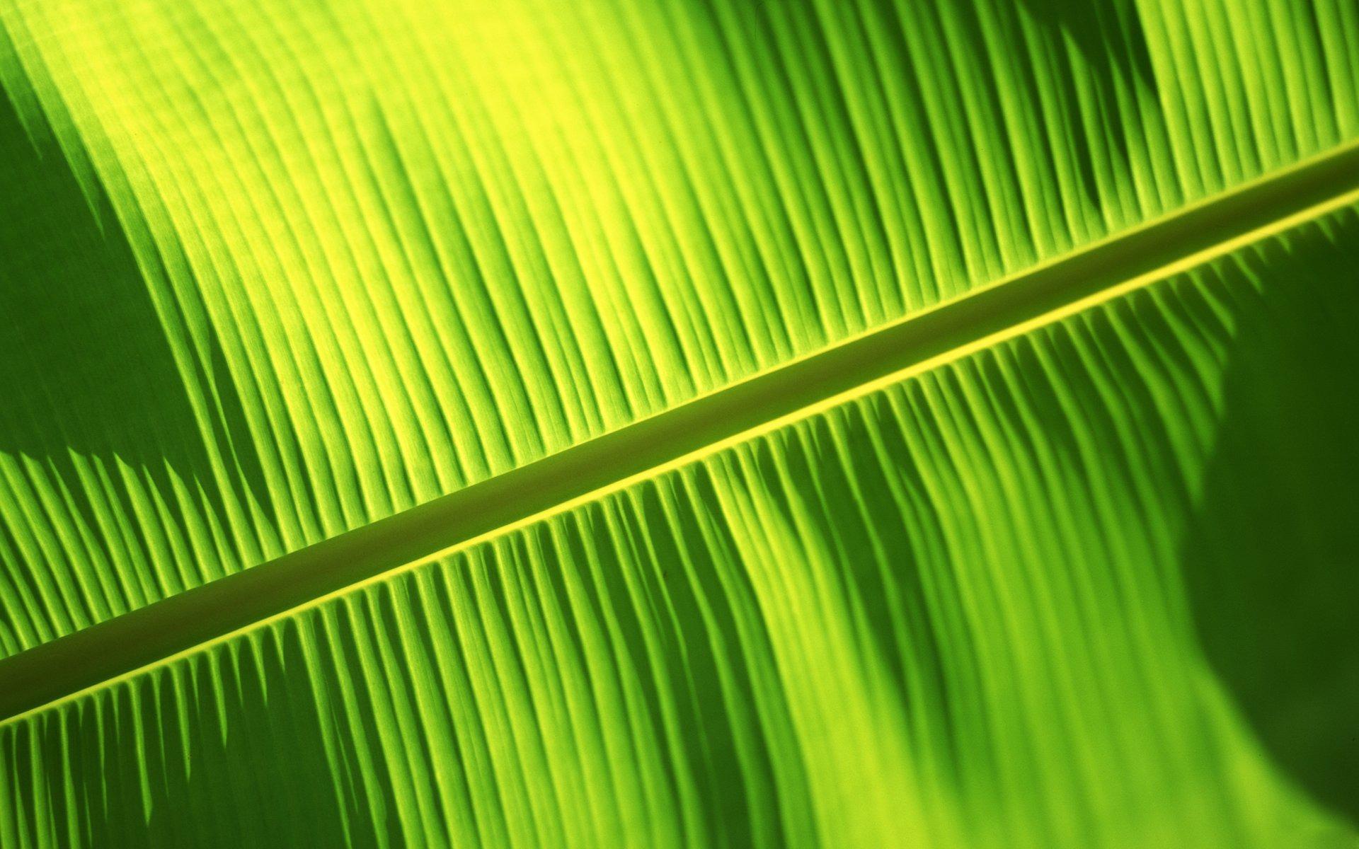 Fall Leaves Wallpaper For Desktop Banana Leaf Backgrounds Pixelstalk Net