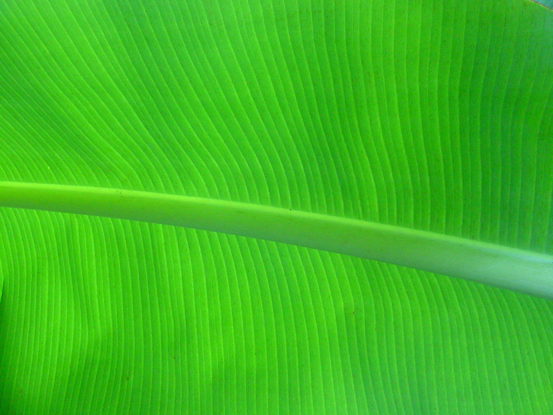 Anime Thanksgiving Wallpaper Banana Leaf Images Free Pixelstalk Net