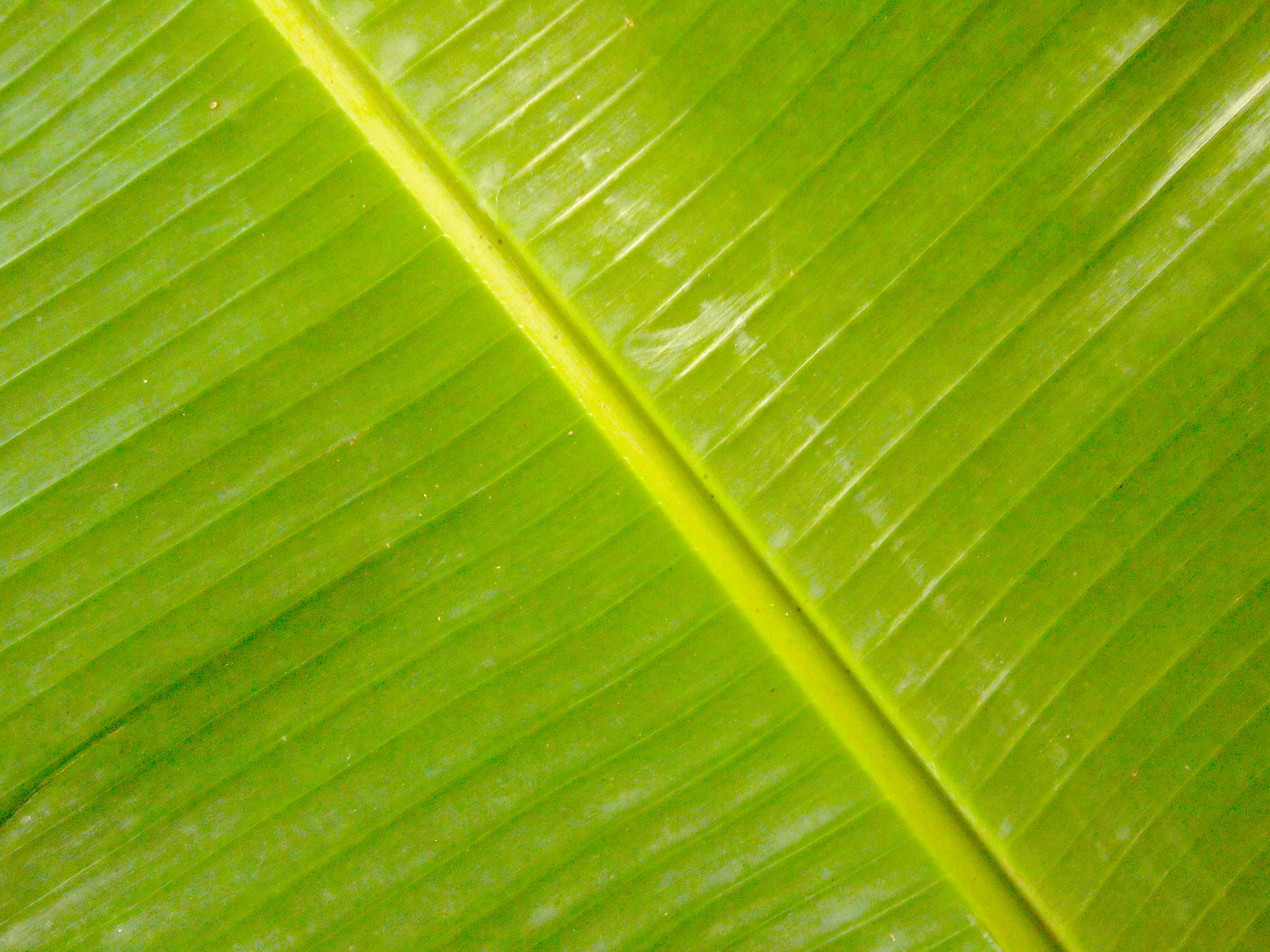 Fall Pictures For Computer Wallpaper Banana Leaf Backgrounds Pixelstalk Net