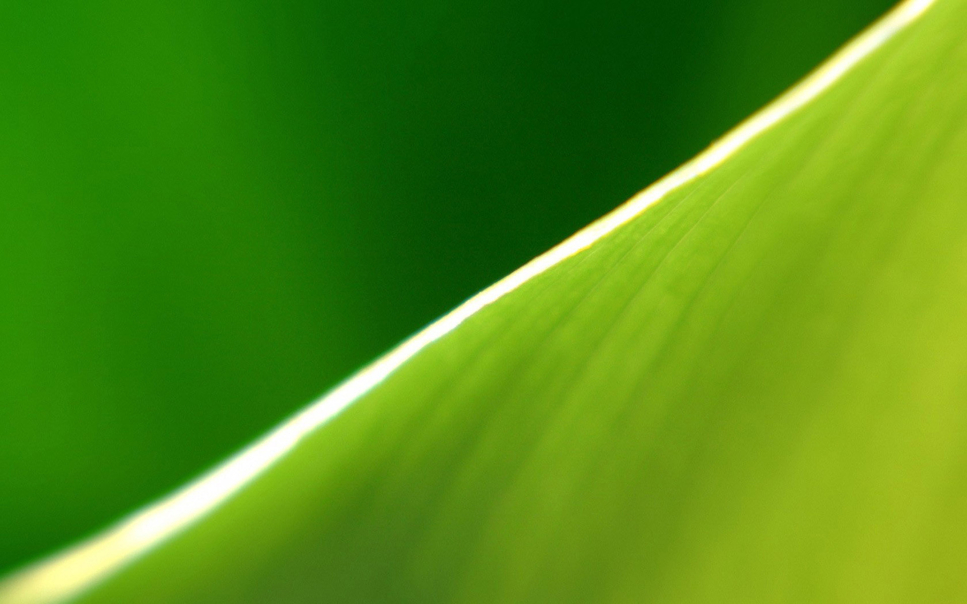 Full Screen Desktop Fall Wallpaper Banana Leaf Wallpapers Hd Pixelstalk Net