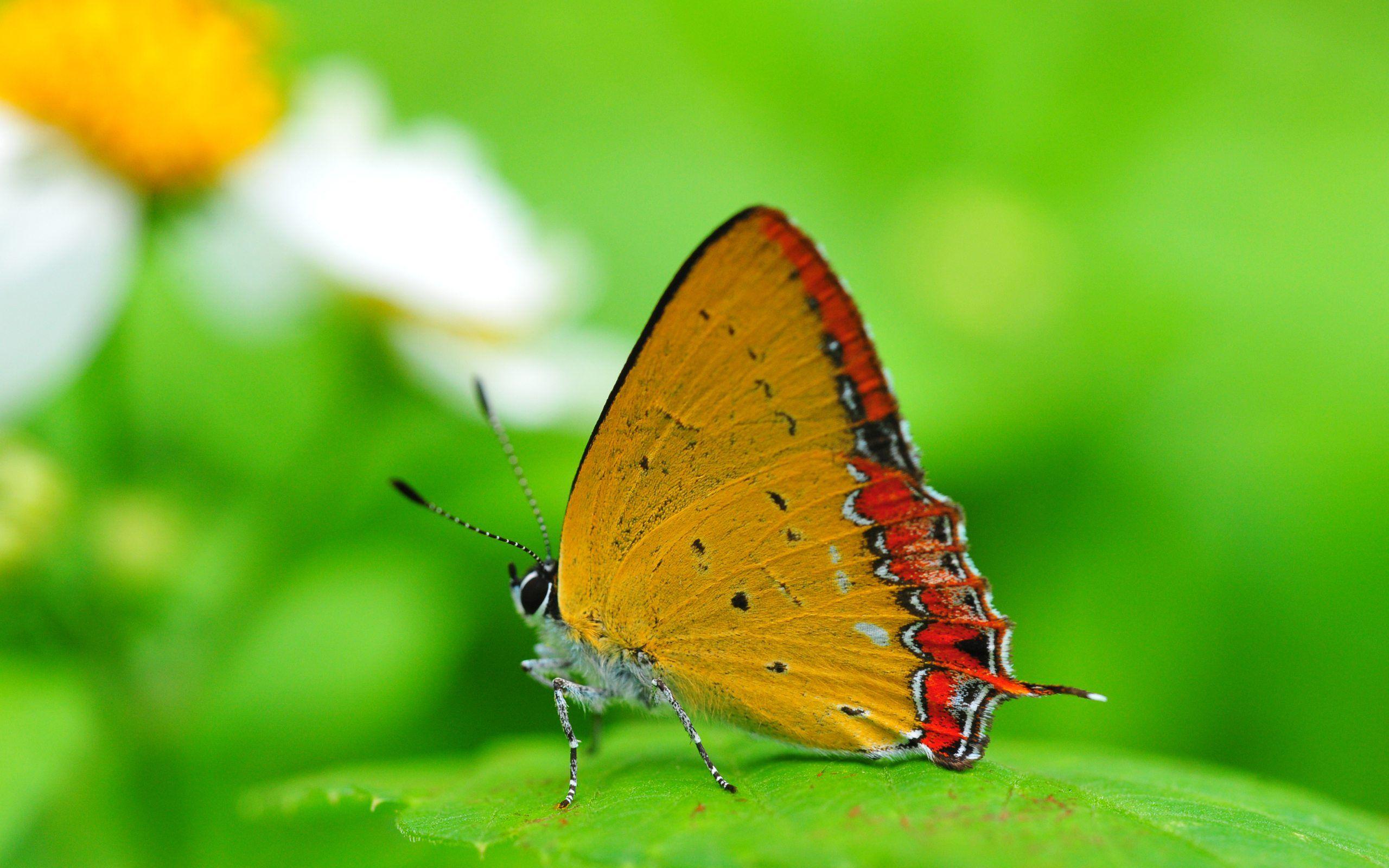 Find over 100+ of the best free natural images. Best HD Nature Backgrounds   PixelsTalk.Net