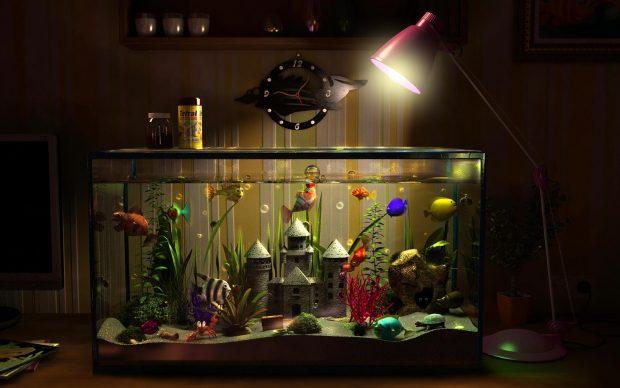 Fish Tank 3d Wallpaper Download Aquarium Backgrounds Download Free Pixelstalk Net