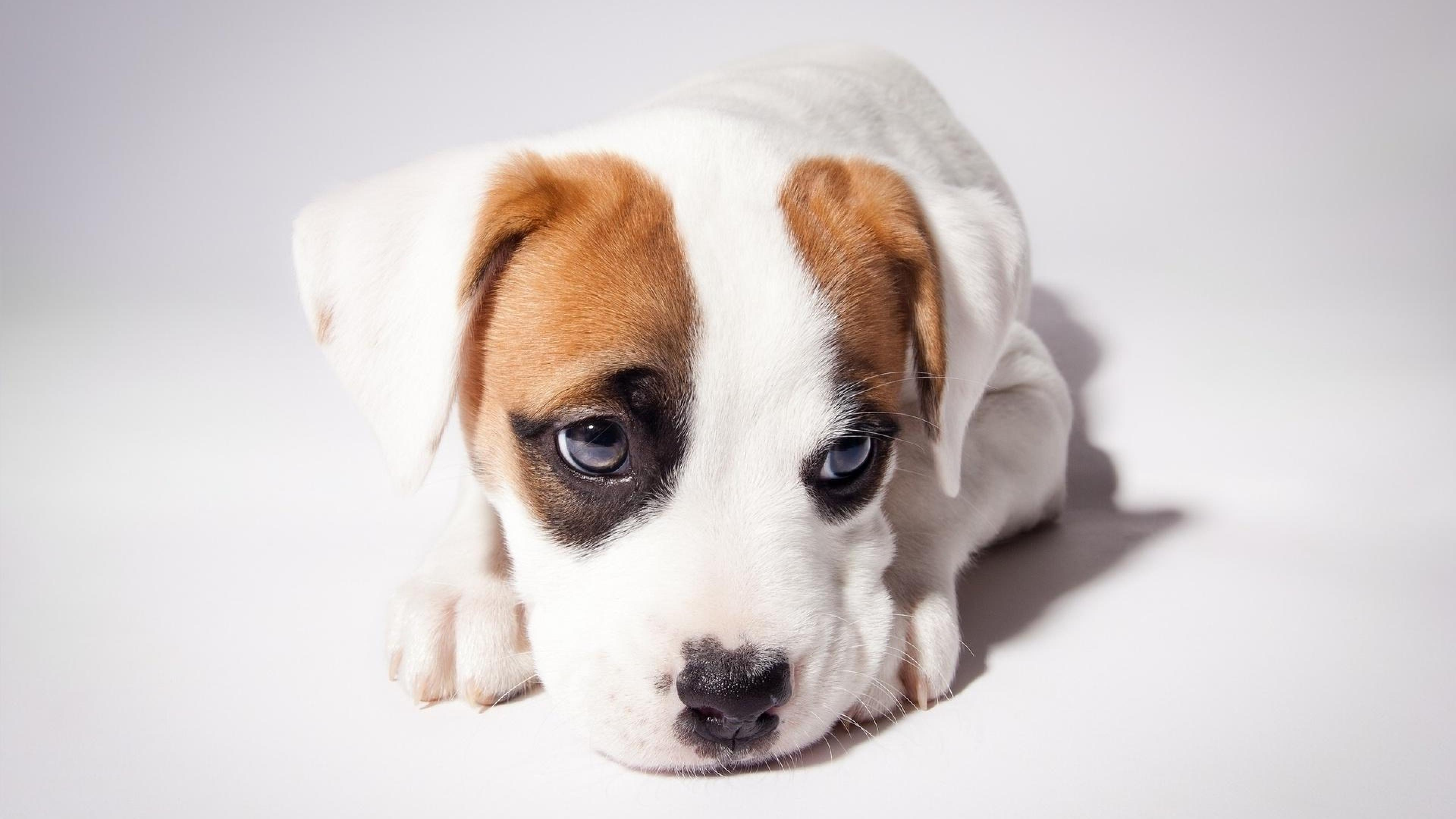Sad Quotes Wallpaper Free Download Cute Puppy Backgrounds Download Free Pixelstalk Net