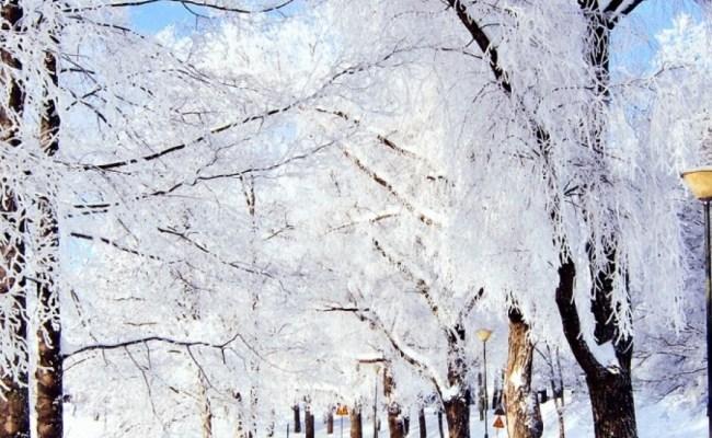 Free Download Winter Wallpapers For Iphone Pixelstalk Net