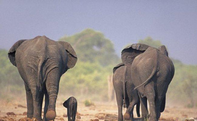 Desktop Elephant Hd Wallpapers Pixelstalk Net