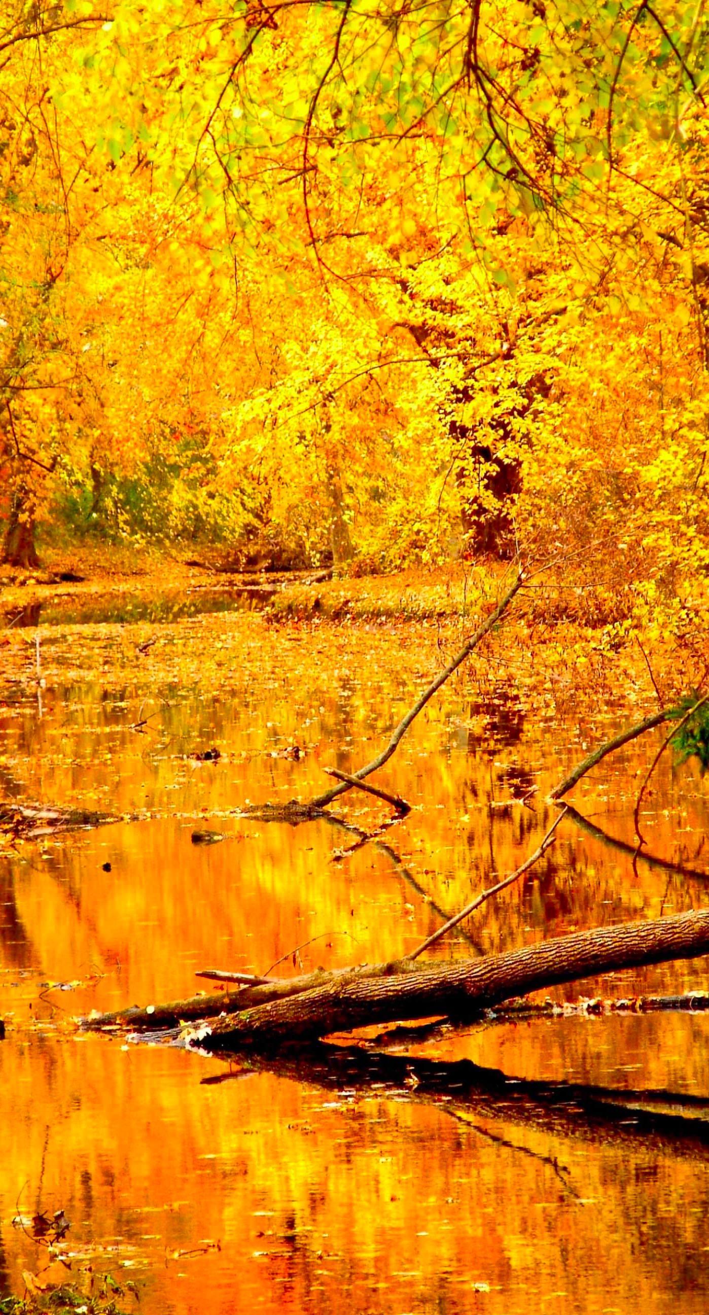 Rain Fall Hd Wallpapers Fall Iphone Wallpapers Pixelstalk Net