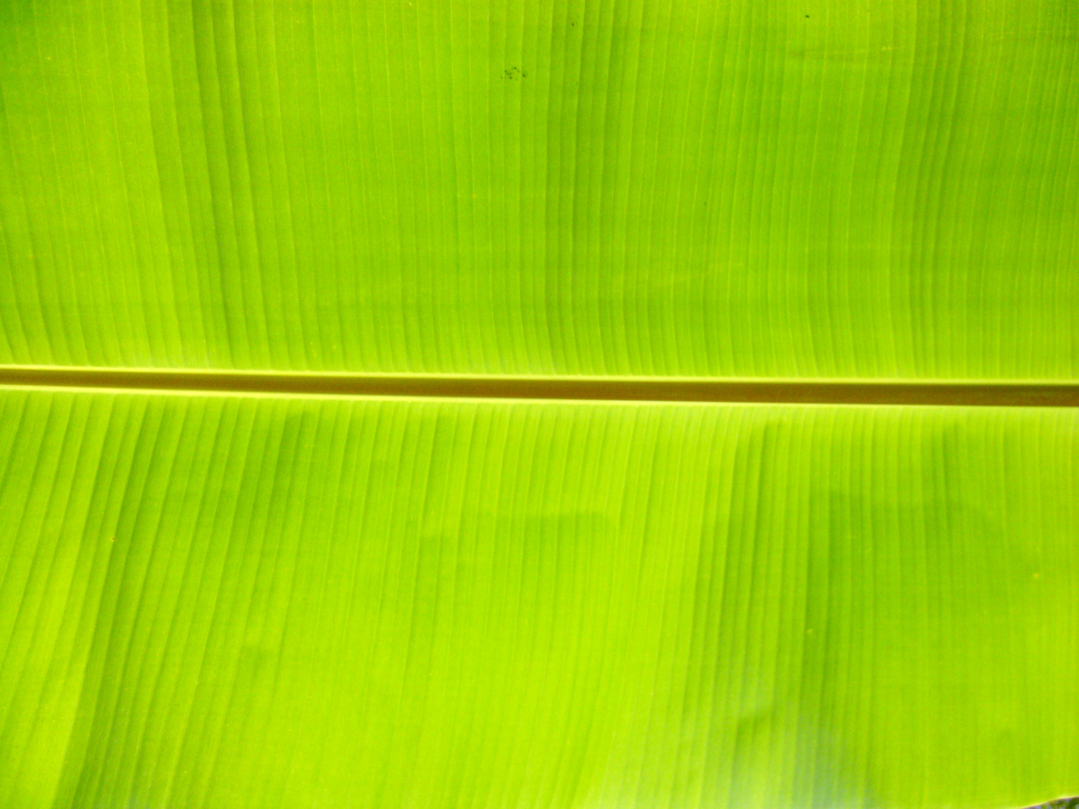 Bengali Quotes Wallpapers Free Download Banana Leaf Backgrounds Pixelstalk Net