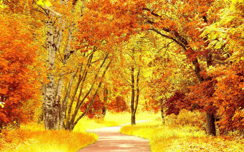 Free Fall Halloween Wallpaper Birch Tree Backgrounds Pixelstalk Net