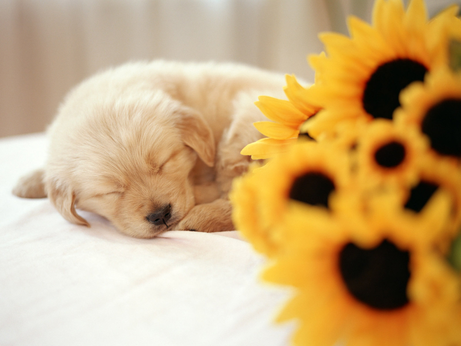 Cute Puppies And Kittens Hd Wallpaper Free Download Cute Puppy Wallpapers Pixelstalk Net
