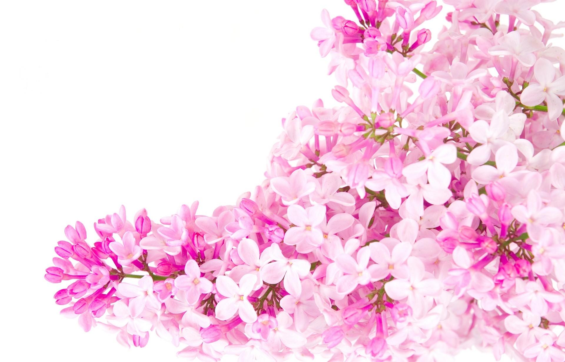 Best aesthetic edgy cute tumblr quotes. Flower Backgrounds Tumblr | PixelsTalk.Net
