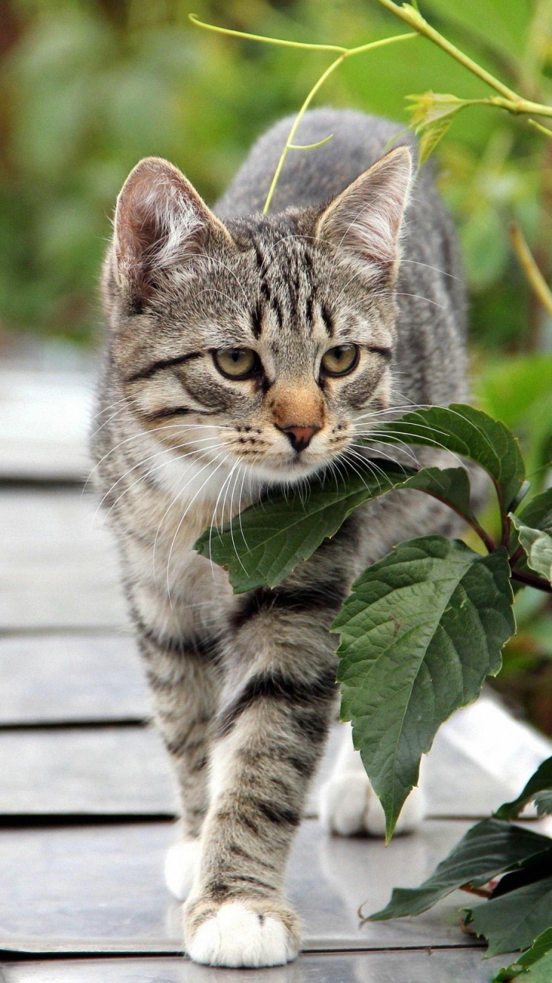 Cute Cat Hd Wallpapers For Mobile Cat Iphone Wallpapers Pixelstalk Net