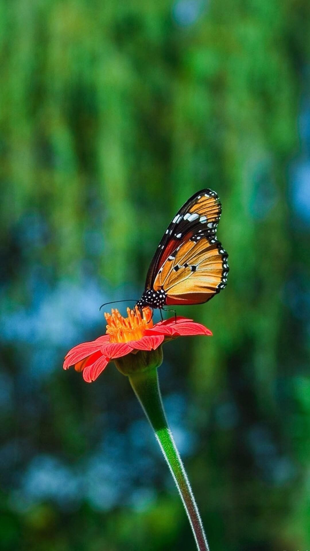 Free Animal Wallpaper Backgrounds Free Butterfly Backgrounds For Android Pixelstalk Net