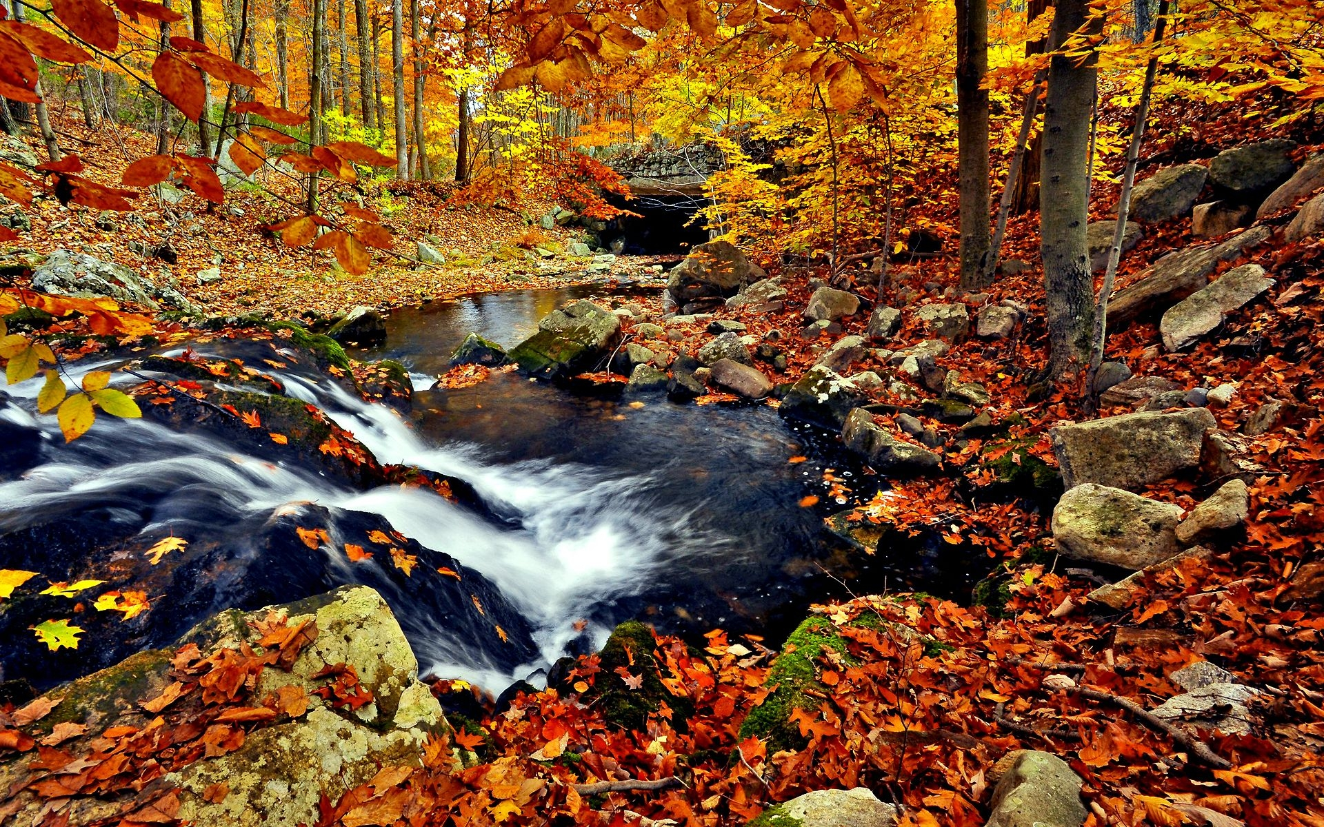 Falling Leaves Live Wallpaper Hd Autumn Forest Wallpaper For Desktop Pixelstalk Net