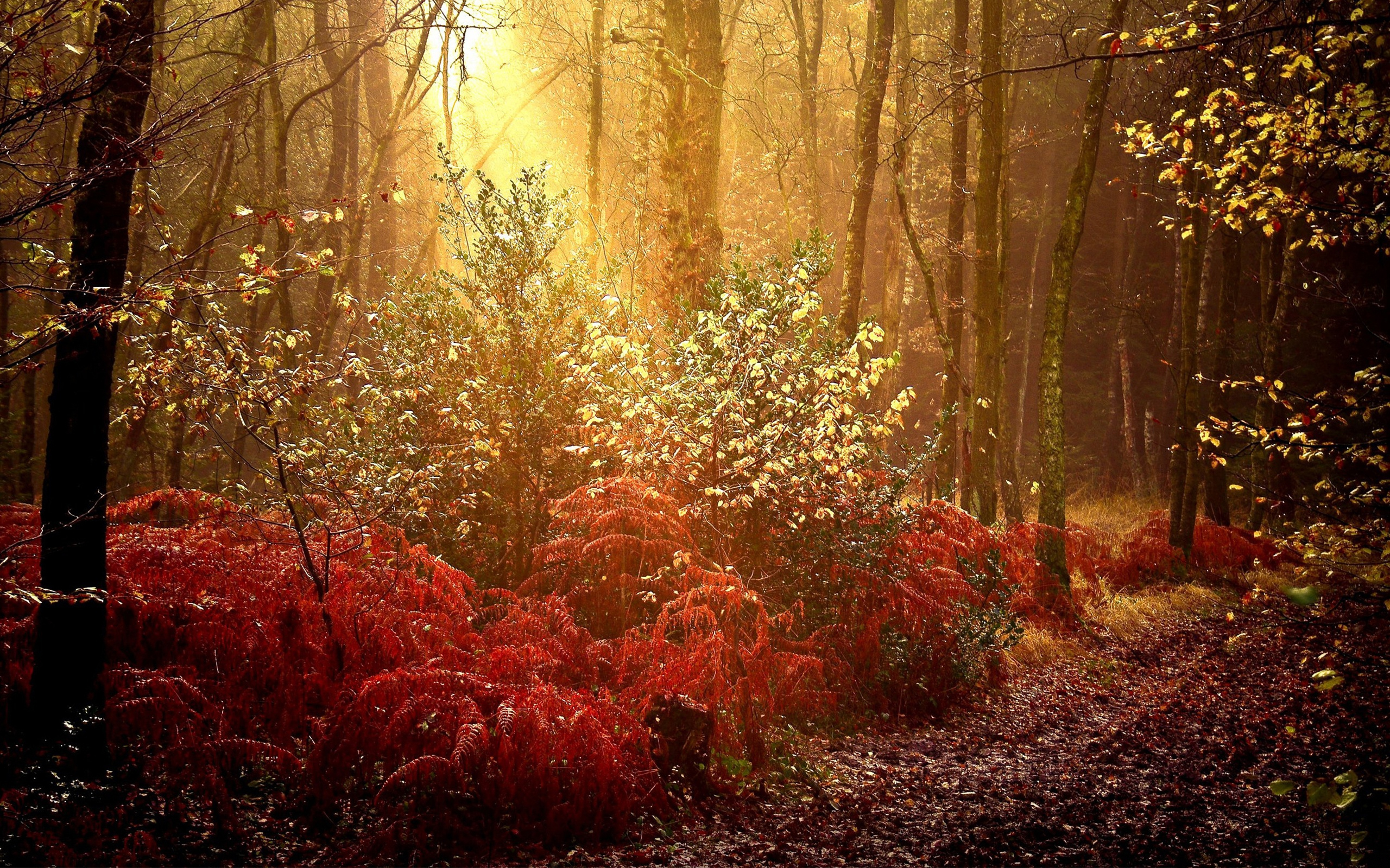 Mystical Fall Desktop Wallpaper Autumn Forest Wallpaper For Desktop Pixelstalk Net