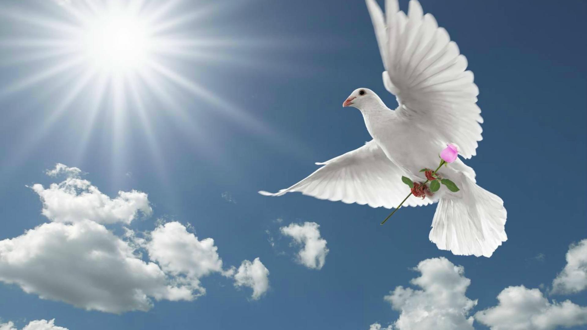 Peace Hd Wallpapers Free Download Dove Wallpapers Hd Pixelstalk Net