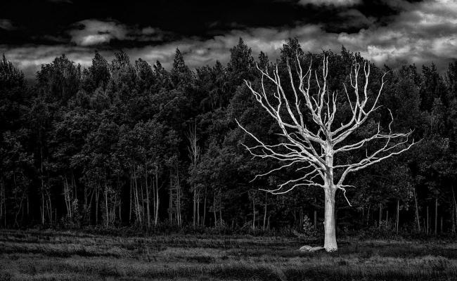 Black And White Forest Background For Desktop Pixelstalk Net
