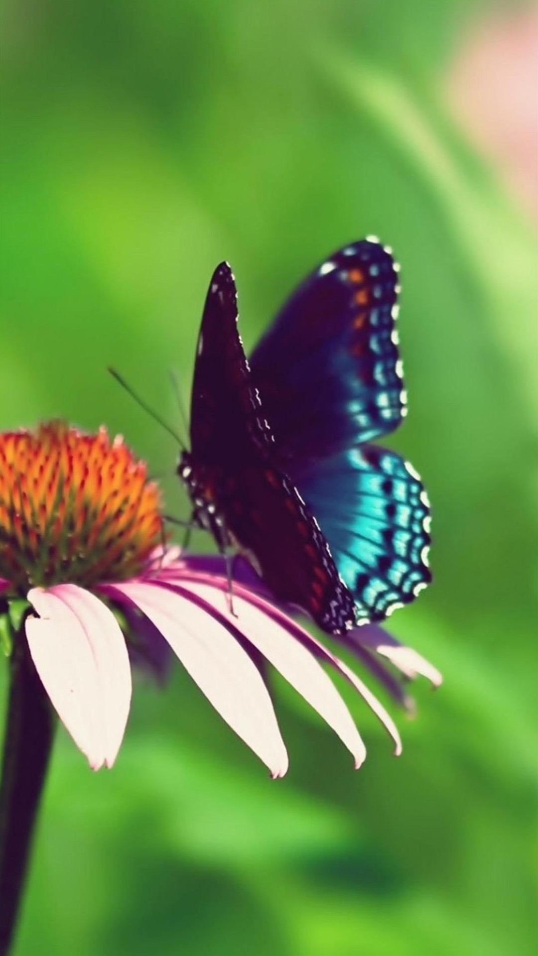 New Live Wallpapers For Iphone X Free Butterfly Backgrounds For Android Pixelstalk Net