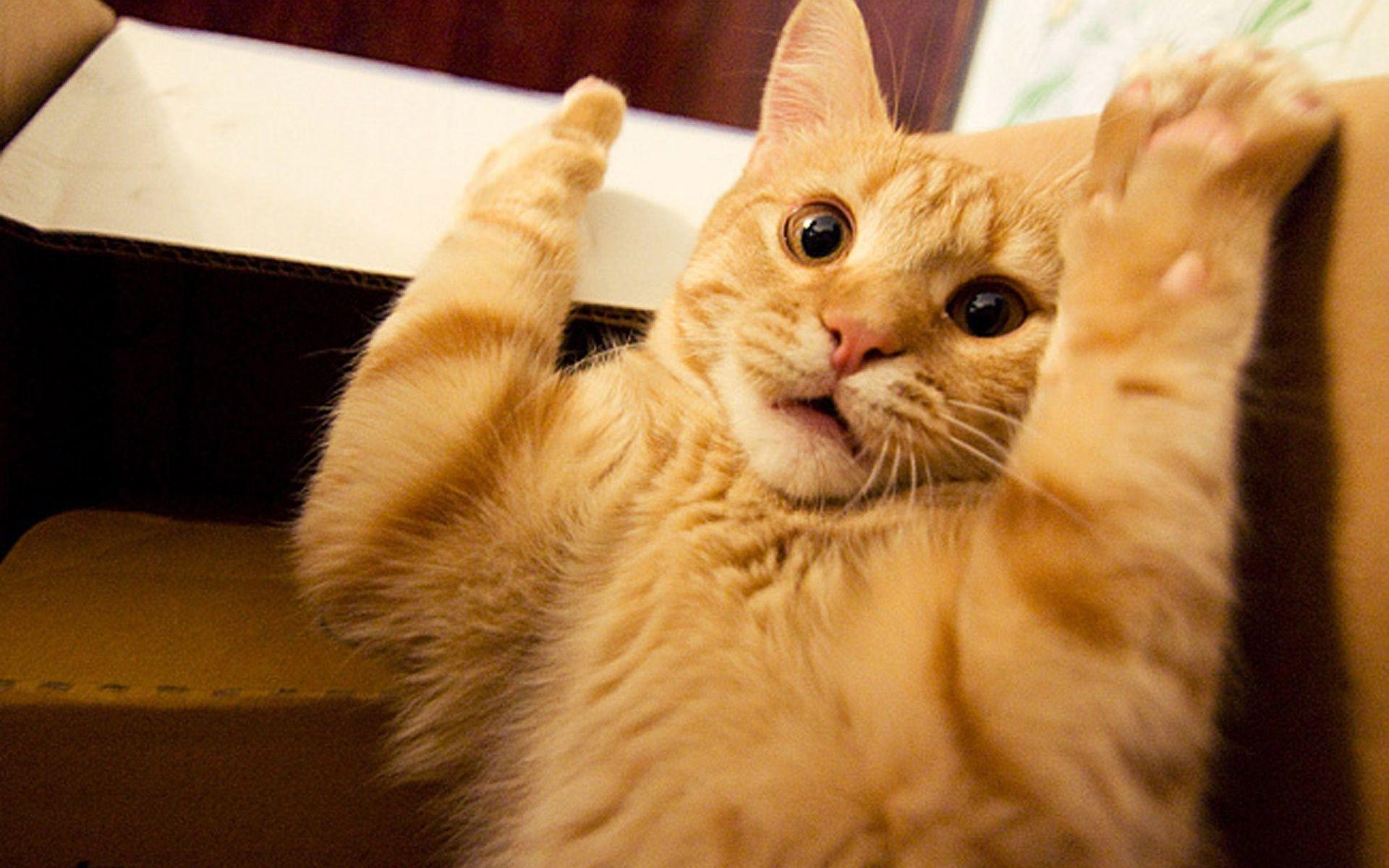 cat wallpaper tumblr   pixelstalk