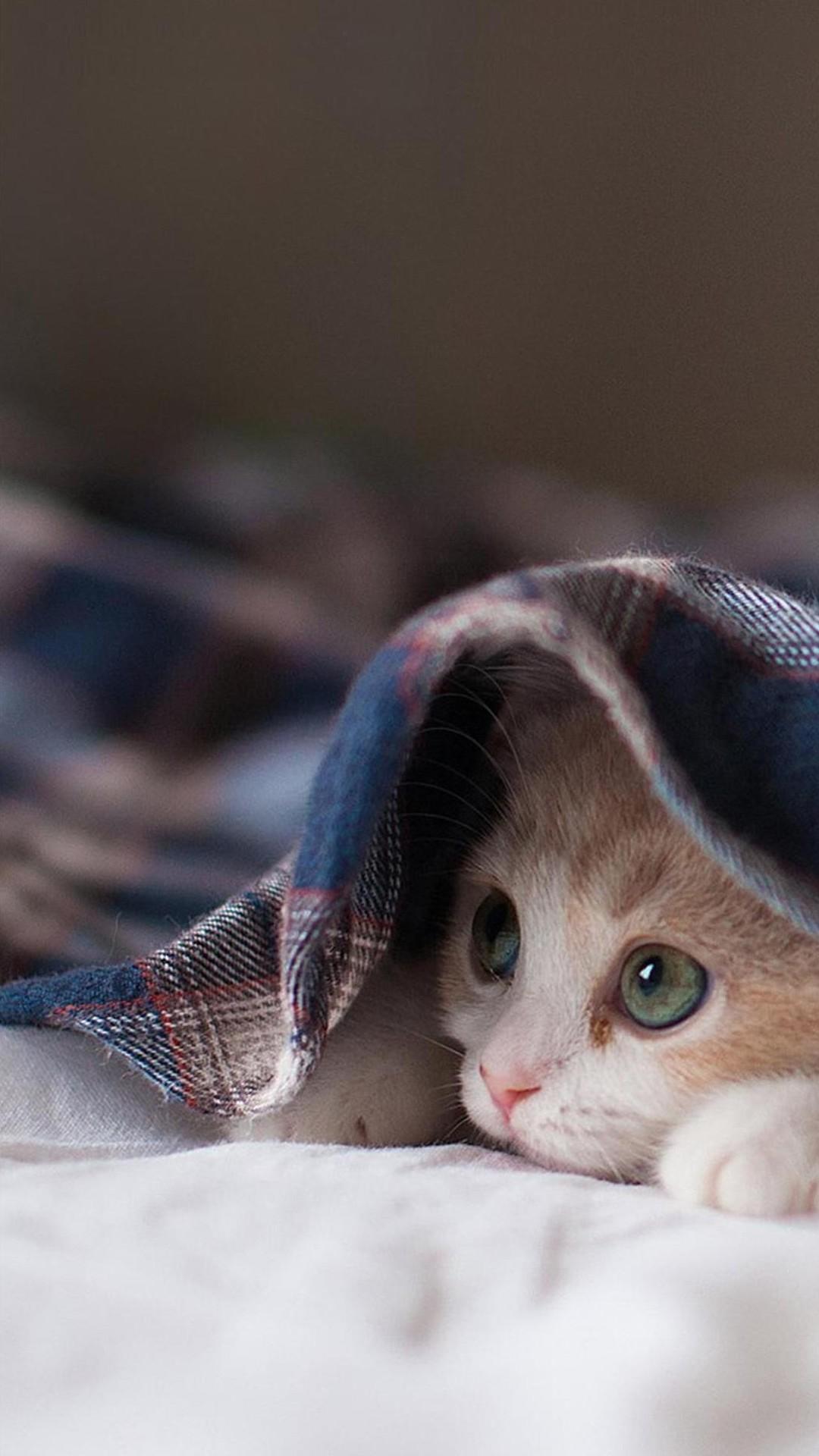 Cute Pet Phone Wallpaper Cat Iphone Wallpapers Pixelstalk Net