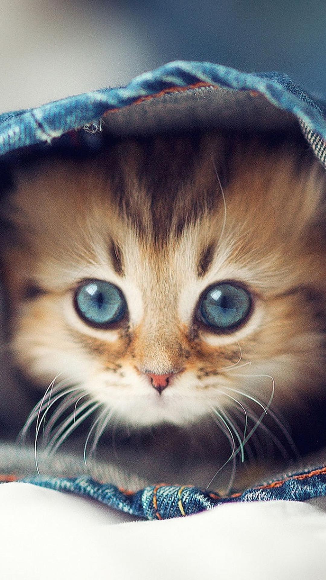 Download Wallpaper Of Cute Puppies Cat Iphone Wallpapers Pixelstalk Net