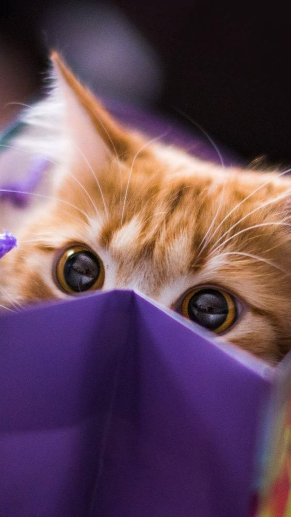 Cool Cats Tumblr Wallpaper iPhone
