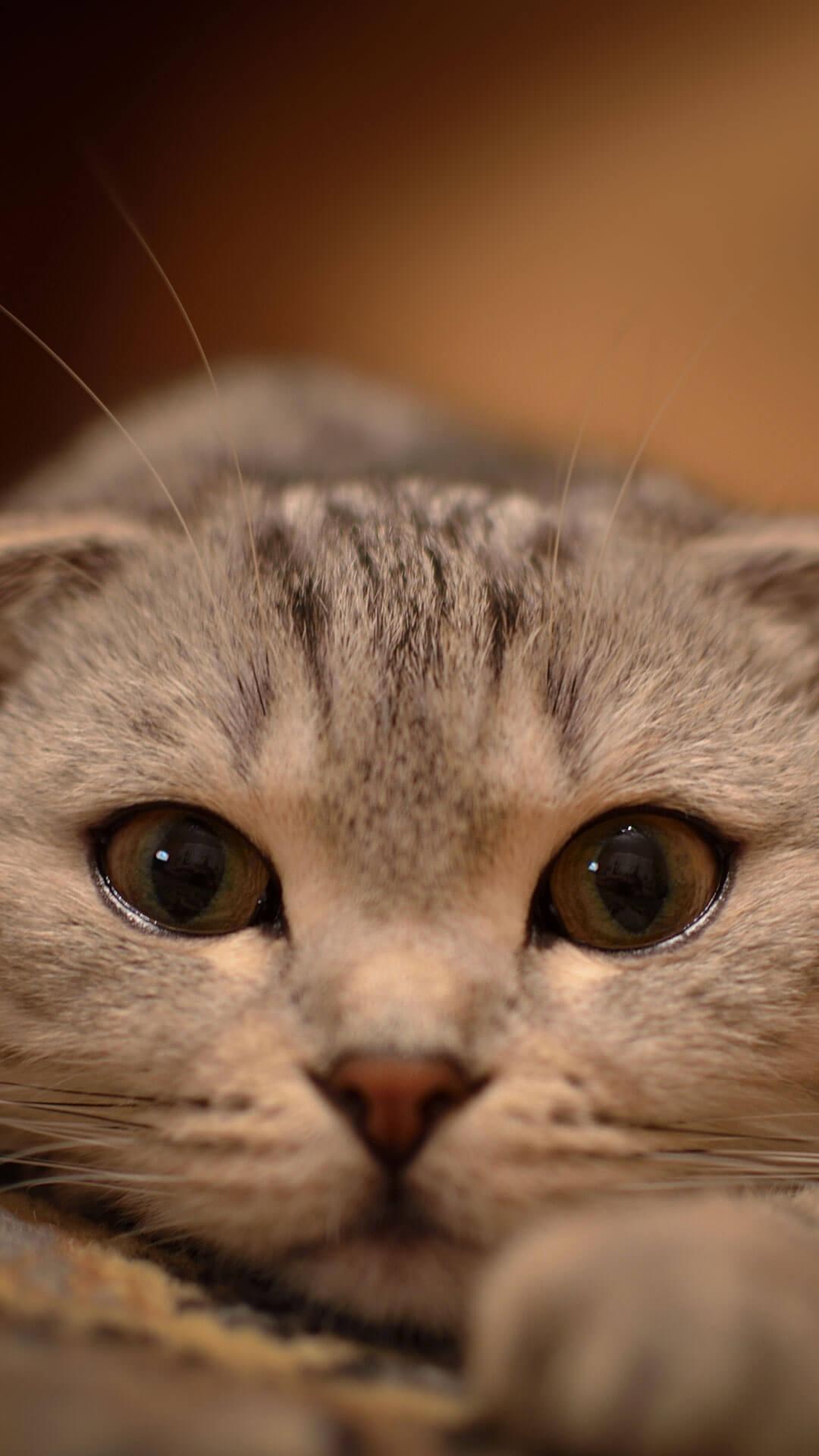 1080p Fall Wallpaper Cat Iphone Wallpapers Pixelstalk Net