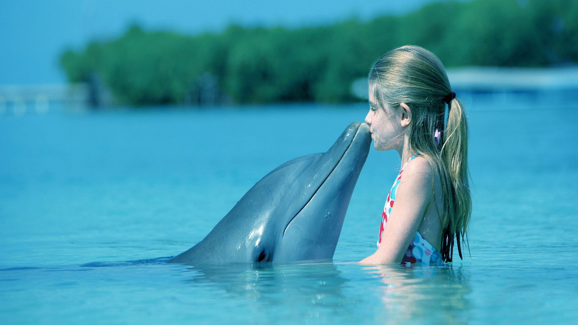 Happy Girl Wallpapers Free Dolphin Wallpapers Hd Pixelstalk Net