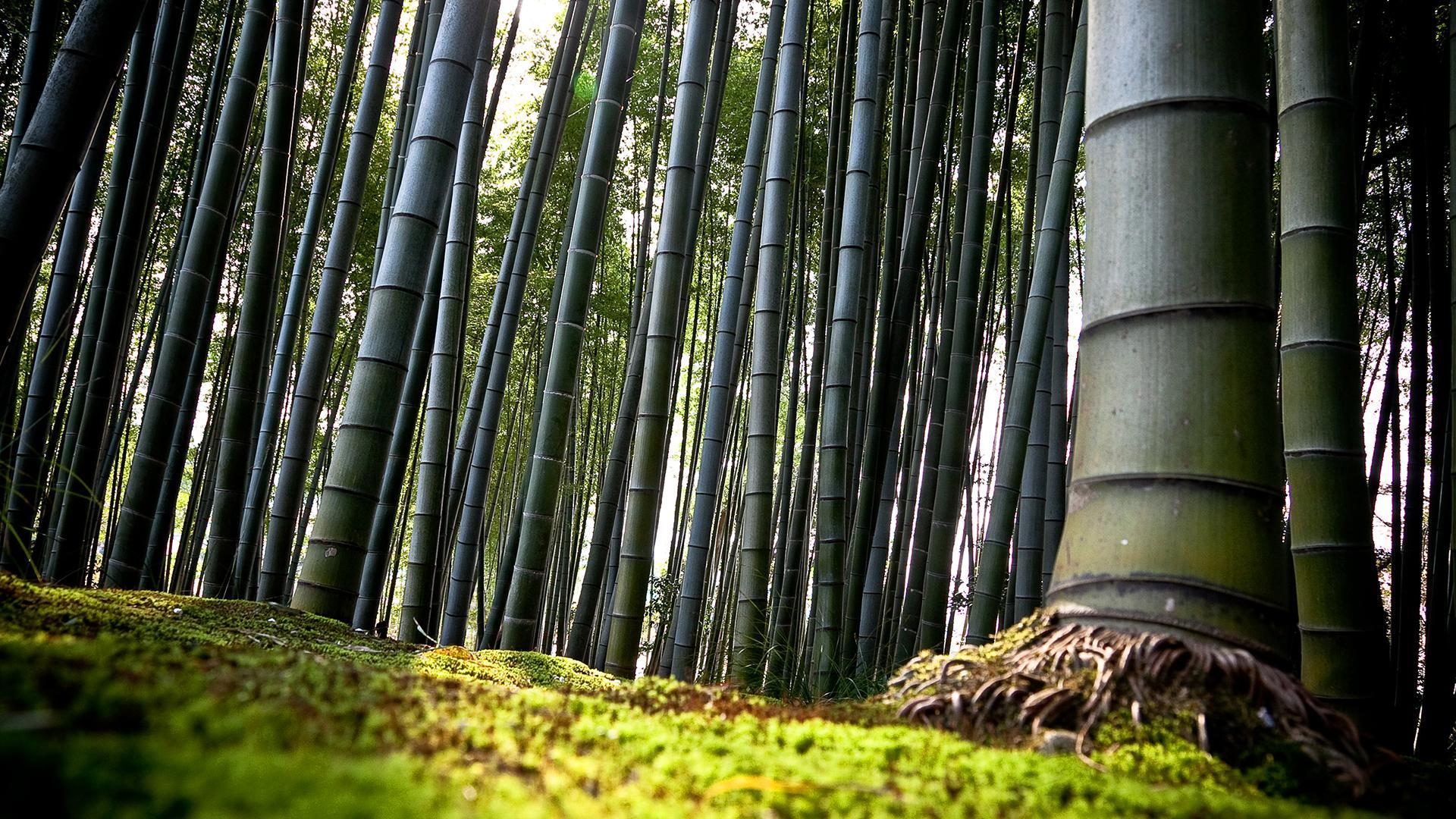 1080p Fall Wallpaper Bamboo Forest Hd Wallpaper Pixelstalk Net