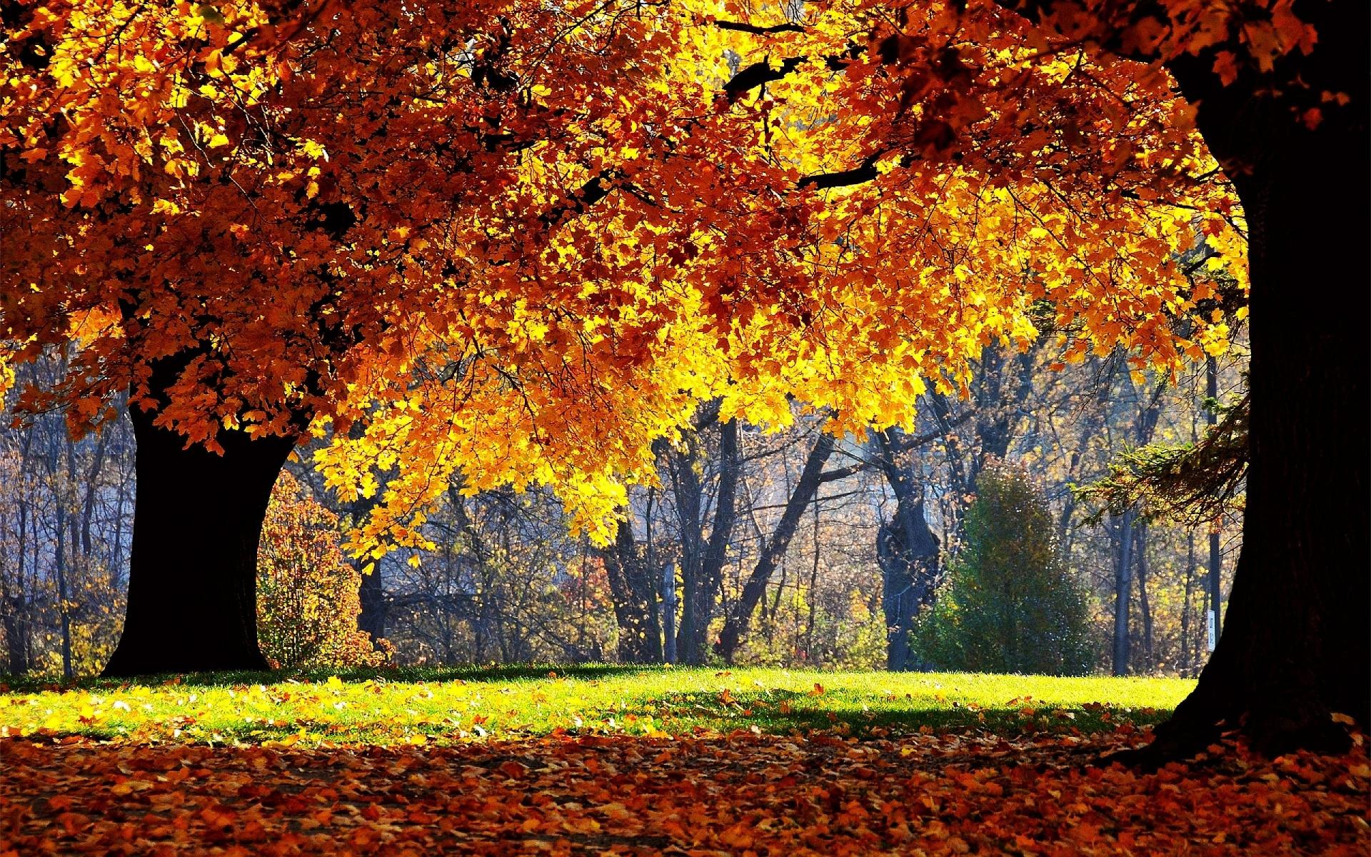 Fall Leaves Desktop Wallpaper Free Autumn Forest Wallpaper For Desktop Pixelstalk Net