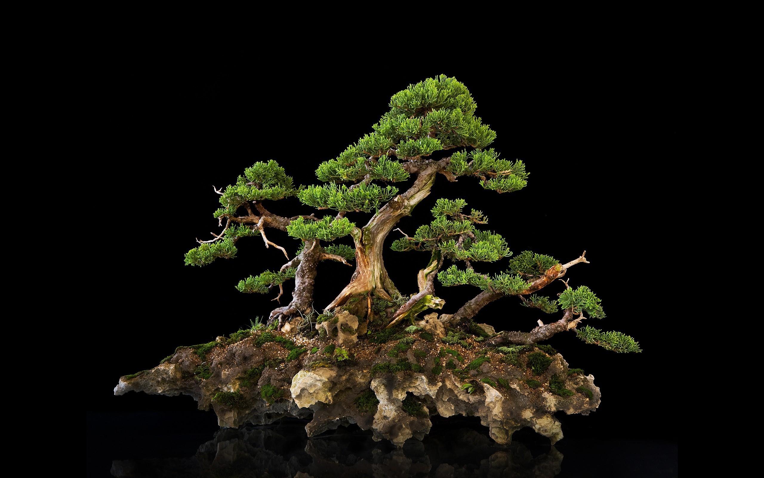 Bonsai Tree Wallpaper For Desktop