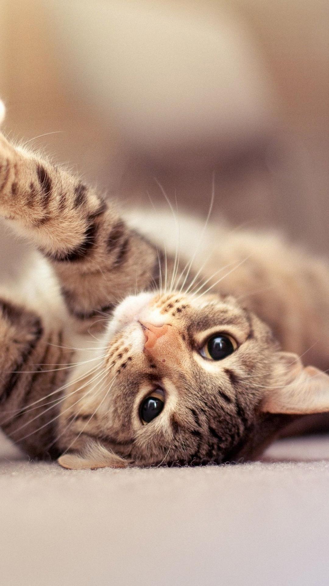 Cute Baby Pics For Whatsapp Wallpaper Cat Iphone Backgrounds Pixelstalk Net